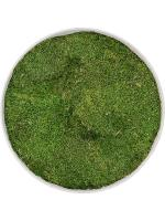 Картина из мха refined natural white 100% flat moss D40 H5 см CMSS00273