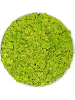 Картина из мха refined natural white 100% reindeer moss (spring green) D40 H5 см CMSS00275