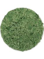 Картина из мха refined natural white 100% reindeer moss (moss green) D40 H5 см CMSS00276
