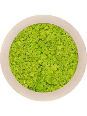 Картина из мха polystone natural 100% reindeer moss (spring green) D80 H5 см CMSS00607