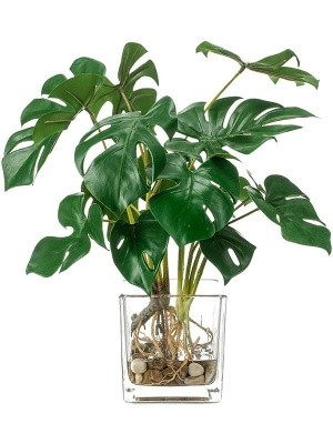 Monstera bush (9x) H45 см 8EE426773